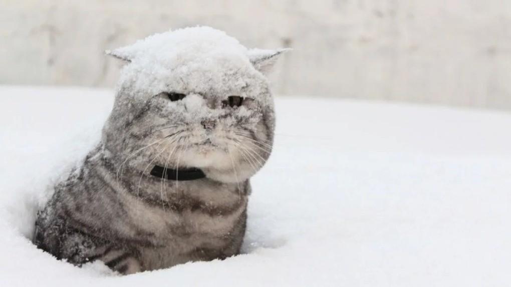 Со снегом прикольные картинки